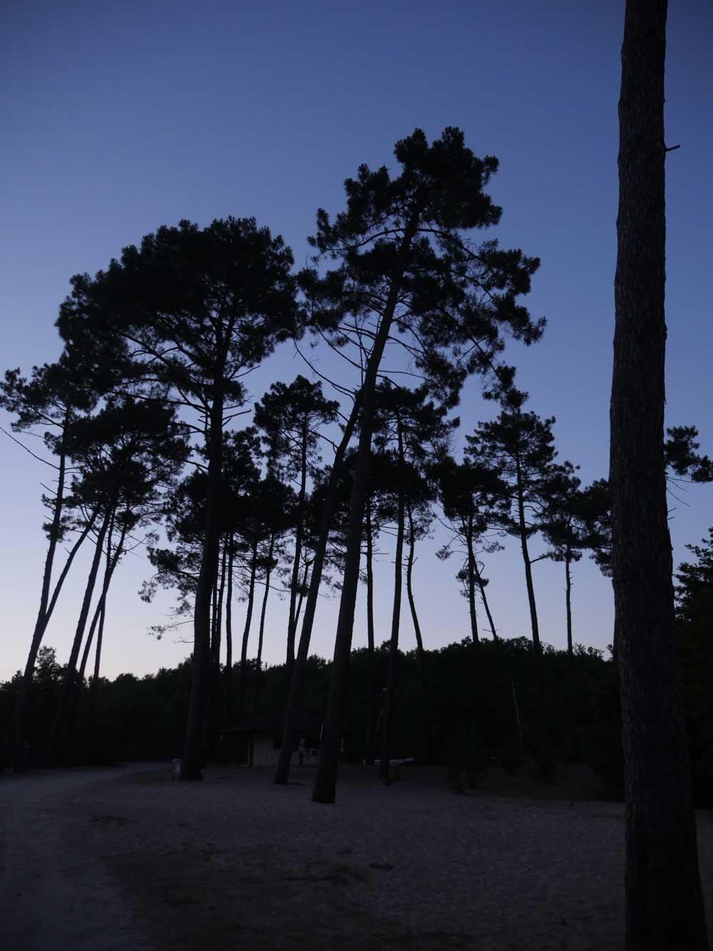 Silja-Night-Forest